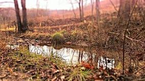反射在森林里 库存照片