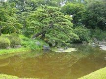 反射在池塘的树 图库摄影