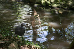 反射在池塘 免版税图库摄影