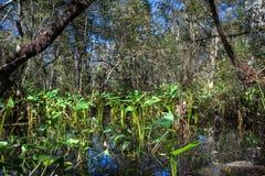 反射在沼泽的沼泽地风景 免版税库存图片