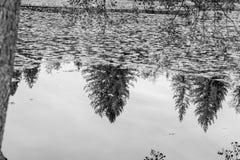 反射在湖的树平静的场面  免版税库存照片