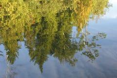 反射在湖的树 免版税库存照片