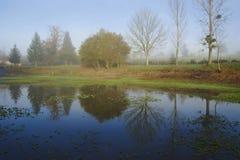 反射在湖的结构树 免版税库存图片