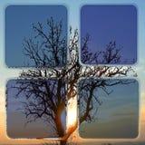 反射在窗口里的一棵光秃的树的剪影在日落 库存图片