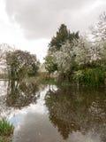 反射在银行的一条可爱的河树 免版税库存照片