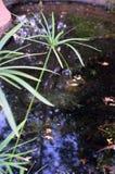 反射在青蛙池塘的光 库存图片