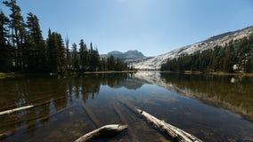 反射在高山湖的山和杉树 免版税库存图片