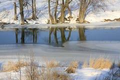 反射在水中的树在冬天。 免版税库存照片