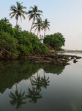 反射在水中的棕榈树 免版税库存照片