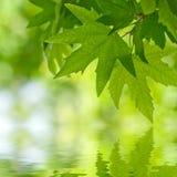 反射在水中的绿色叶子, 库存图片