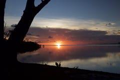 反射在水的桃红色日落在森林 免版税库存照片