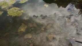 反射在The Creek 免版税图库摄影