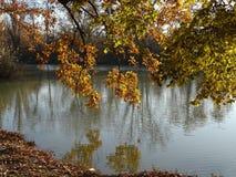 反射垂悬的分支在池塘 图库摄影