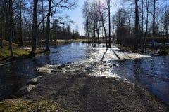 反射太阳 从Swedens wunderful自然的照片 库存照片