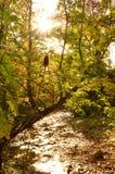 反射小小河的太阳在森林 免版税库存图片