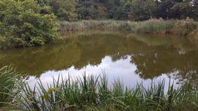 反射性湖表面 免版税库存图片