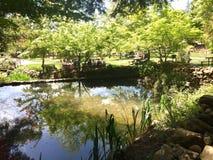 反射性的池塘 免版税库存照片