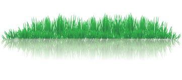 反射性草 向量例证