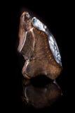 反射性表面上的僵化的三角恐龙HorridusShed牙 免版税图库摄影