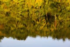 反射树在清楚的水中 海岛酸值苏梅岛,泰国 免版税库存照片