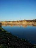 反射棕色植物在蓝色河 库存图片