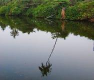 反射椰子树的水的反射和Greenergy在寂静的水中 库存图片