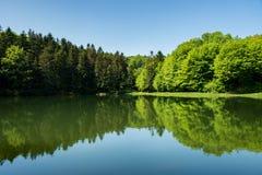 反射水表面上的森林风景 免版税库存照片
