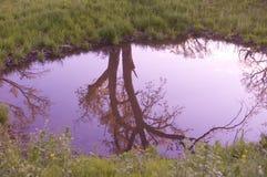 反射池塘 库存图片