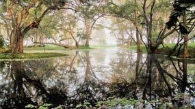 反射沼泽地witn早晨有薄雾的实质 库存图片