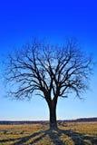 反射的影子结构树 免版税库存照片