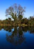 反射的结构树 库存图片