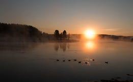 反射通过在加拿大鹅的清早薄雾的日出在黄石河在海登谷在黄石 免版税库存照片