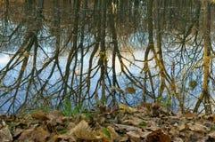 反射,树,水,湖 库存照片
