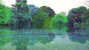 反射:树是绿色的,反映场面 库存照片
