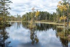 反射9月挪威,秋天树在湖 免版税图库摄影