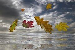 反射水波的秋叶 免版税库存图片