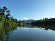 反射-热带河 库存图片