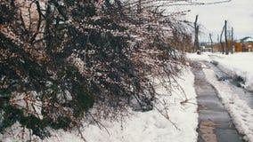 反常天气在4月在春天 在暴风雪以后的下落的树 股票视频