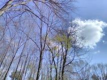 反弹的冬天与云彩的天空 免版税库存照片