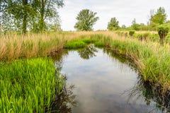 反映一条小小河的光滑的反射的水表面 库存图片