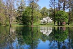 反映和池塘 库存照片