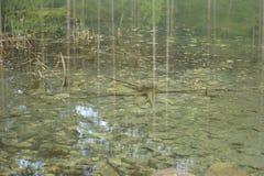 反映在池塘 库存照片