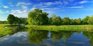 反映河结构树 库存照片