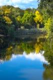 反映河结构树 图库摄影