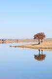 反映葡萄牙结构树的alentejo蓝色湖 库存照片