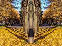 反映从树胡同树的样式与阴影在金黄秋天 免版税库存图片