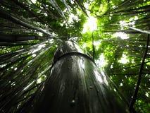发光下来在树的太阳 免版税库存照片
