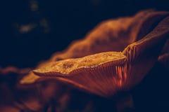 发光从太阳的蘑菇 库存图片