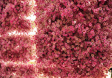 发光从的内部的红色花 免版税图库摄影