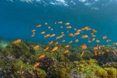 发光入海,水下的看法的阳光 免版税库存图片